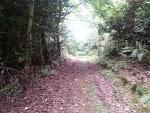 Lane at Glenstal Abbey